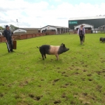 Countryside Day June 2014_04