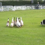 Countryside Day June 2014_08